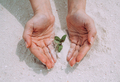 Green sprout in woman's hands - PhotoDune Item for Sale