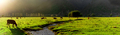 Panoramic view. Argentine Chilean Patagonian landscape with freely grazing cows near a river. Group - PhotoDune Item for Sale