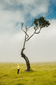 Woman and the Tree - PhotoDune Item for Sale