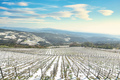 Vineyards rows covered by snow in winter. Riparbella, Pisa, Italy - PhotoDune Item for Sale