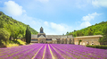 Abbey of Senanque and field of lavender flowers. Gordes, Luberon, Provence, France. - PhotoDune Item for Sale