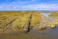 campshedding Tidal Marshland Waddensea - PhotoDune Item for Sale