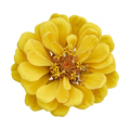 Beautiful yellow flower zinnia isolated. - PhotoDune Item for Sale