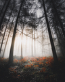 Sunlight shining through the misty woods - PhotoDune Item for Sale