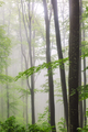 Morning fog in a spring forest - PhotoDune Item for Sale