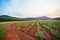 Australian Sugarcane Fields and Landscape - PhotoDune Item for Sale