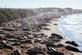 Elephant Seals in California USA - PhotoDune Item for Sale