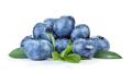Blueberry on white background - PhotoDune Item for Sale
