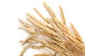 Sheaf of wheat - PhotoDune Item for Sale