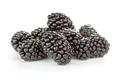 heap of fresh blackberry - PhotoDune Item for Sale