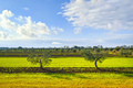 Two olive trees and countryside panorama in Tuscany. Cecina, Livorno, Italy - PhotoDune Item for Sale
