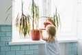 Funny cute baby girl watering house plant at room in bright interior home - PhotoDune Item for Sale