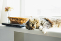 A fluffy tabby cat lies on the windowsill in the sun at home - PhotoDune Item for Sale