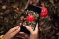 Mushroom identification - PhotoDune Item for Sale