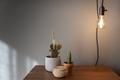 Cactus Plants decoration - PhotoDune Item for Sale