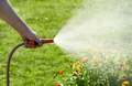 unrecognizable person waters flowers and plants with hose in home garden - PhotoDune Item for Sale