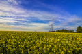 Power lines on the field. - PhotoDune Item for Sale