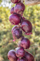 red onion - PhotoDune Item for Sale