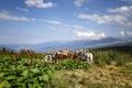 cargo horses - PhotoDune Item for Sale