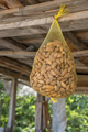 Hanging almond - PhotoDune Item for Sale