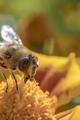 bee - PhotoDune Item for Sale