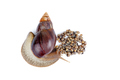 Mature and young giant African snails - PhotoDune Item for Sale
