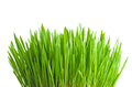 Green grass - PhotoDune Item for Sale