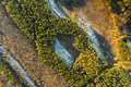 Aerial View Of Deciduous Trees Without Foliage Leaves And Green Forest In Landscape At Early Spring - PhotoDune Item for Sale