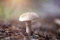 Mushroom in the forest in sunset. - PhotoDune Item for Sale