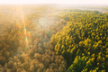 Aerial View Of Deciduous Trees Without Foliage Leaves And Green Pine Forest In Landscape During - PhotoDune Item for Sale