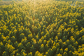 Aerial View Of Green Pine Coniferous Forest In Landscape During Sunset In Spring. Top View From - PhotoDune Item for Sale
