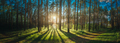 Sunset Sunrise Sun Sunshine In Sunny Summer Coniferous Forest. Sunlight Sunbeams Through Woods In - PhotoDune Item for Sale