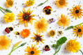Autumn Festive Floral Background - PhotoDune Item for Sale