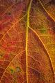 leaf surface - PhotoDune Item for Sale