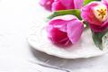 Amazing pink tulips on the stone background - PhotoDune Item for Sale