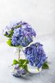 Amazing blue hydrangea flowers - PhotoDune Item for Sale