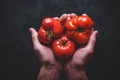 Hands holding fresh red tomatoes - PhotoDune Item for Sale