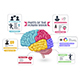 Functional Areas of the Human Brain Diagram - GraphicRiver Item for Sale