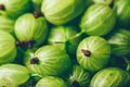 Background of Ripe and Fresh Gooseberry. - PhotoDune Item for Sale