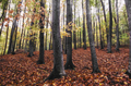 Colorful autumn forest - PhotoDune Item for Sale