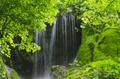 Green lush foliage detail - PhotoDune Item for Sale