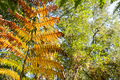 autumnal fern vegetation - PhotoDune Item for Sale