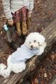 High angle view of Bichon Frise relaxing on log in forest - PhotoDune Item for Sale