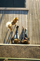 High angle view of multi-ethnic couple with dog relaxing on boardwalk outdoors - PhotoDune Item for Sale