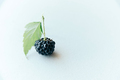black whole raw ripe blackberry with green leaf on white paper - PhotoDune Item for Sale