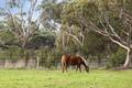 Horse in paddock - PhotoDune Item for Sale
