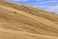flock of sheep - PhotoDune Item for Sale