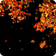 Autumn Maple Trees with Falling Leaves on Transparent Background - VideoHive Item for Sale