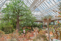 Conservatory at Kirstenbosch National Botanical Garden - PhotoDune Item for Sale