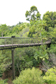 Kirstenbosch Tree Canopy Walkway, the Boomslang - PhotoDune Item for Sale